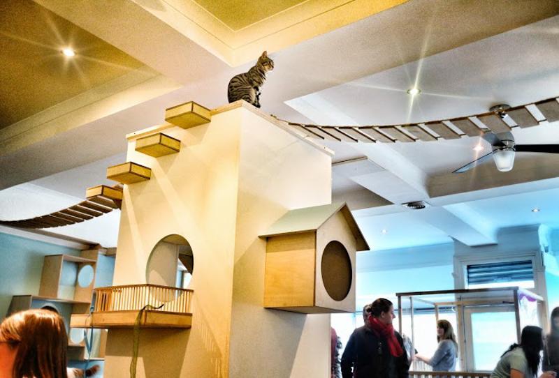 Maison De Moggy Scotland 39 S First Cat Cafe Design Milk