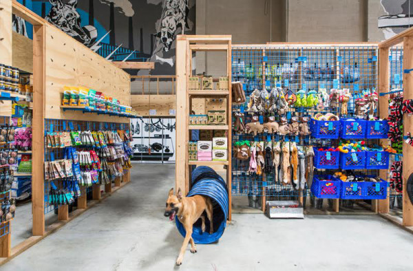 Blue_Collar_Working_Dog_retail_space_agility_course_Scout_Regalia