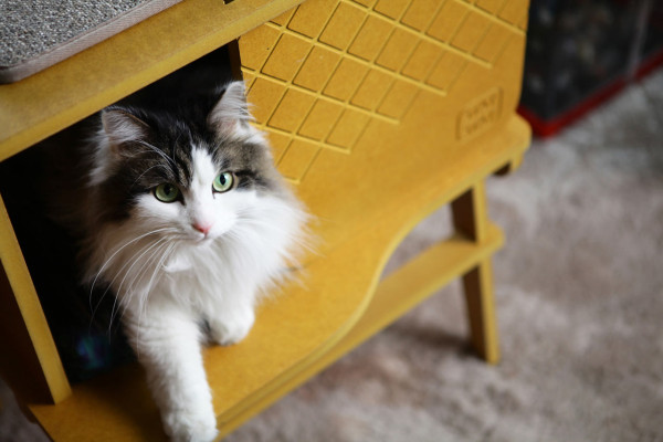 Frank-Cat-House-STAYSTAY-monocomplex-13