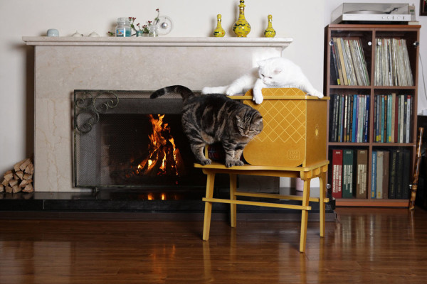Frank-Cat-House-STAYSTAY-monocomplex-14