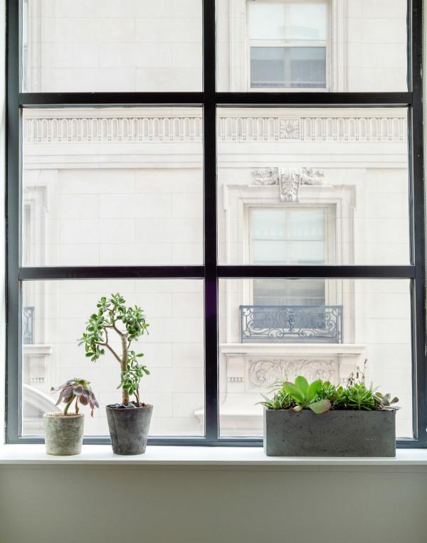 ROOST - window plants - Matthew Williams