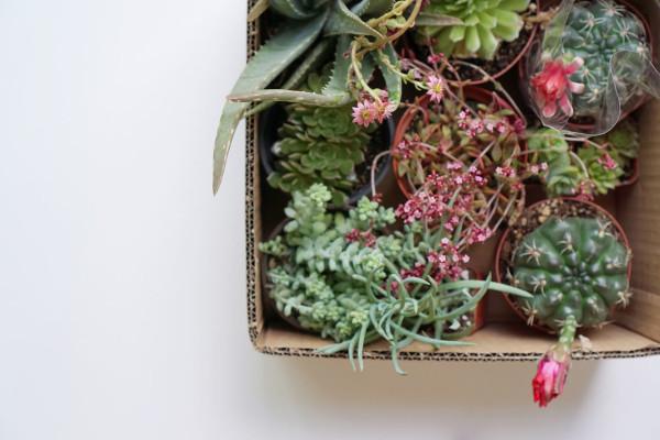 DIY-Modern-Planter-03