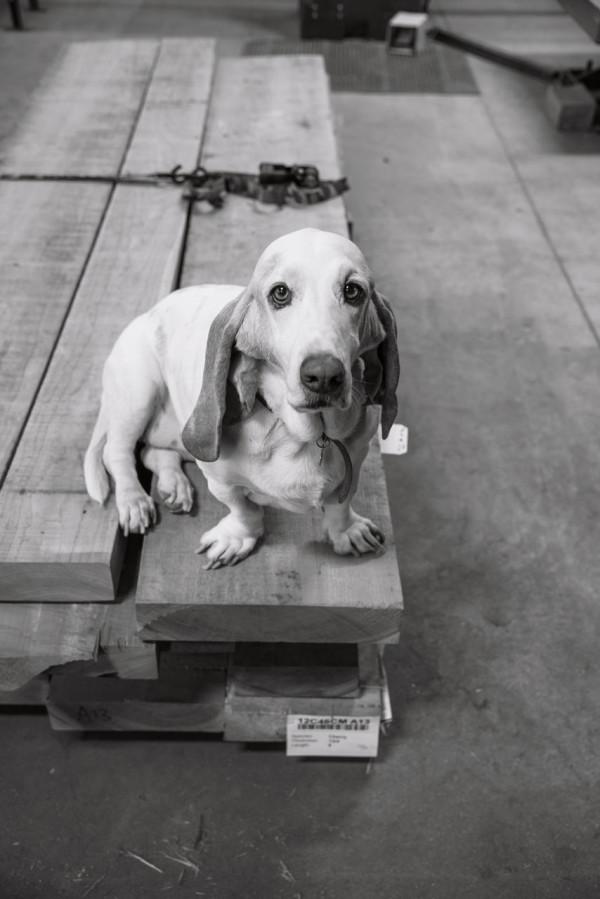 Where-I-Work-Adam-Rogers-Thos-Moser-4-dog