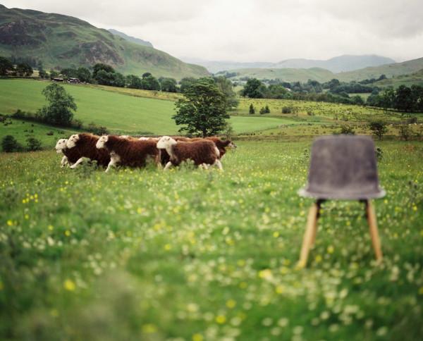 Solidwool-Herdwick-wool-sheep