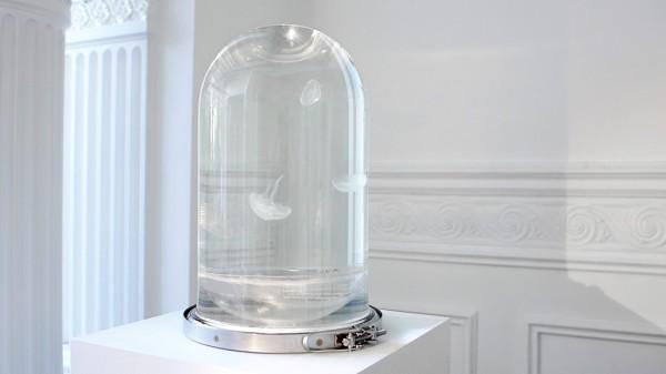 Darwin-tank-jellyfish-04