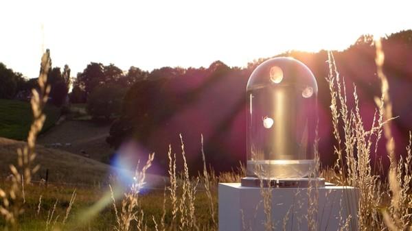 Darwin-tank-jellyfish-05