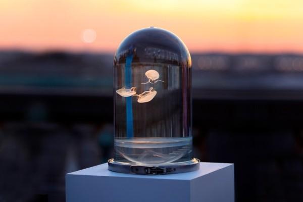 Darwin-tank-jellyfish-06