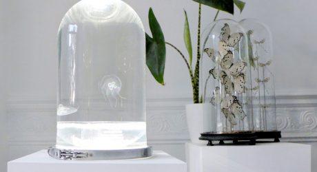 The Darwin Aquarium Displays the Poetic Beauty of Jellyfish
