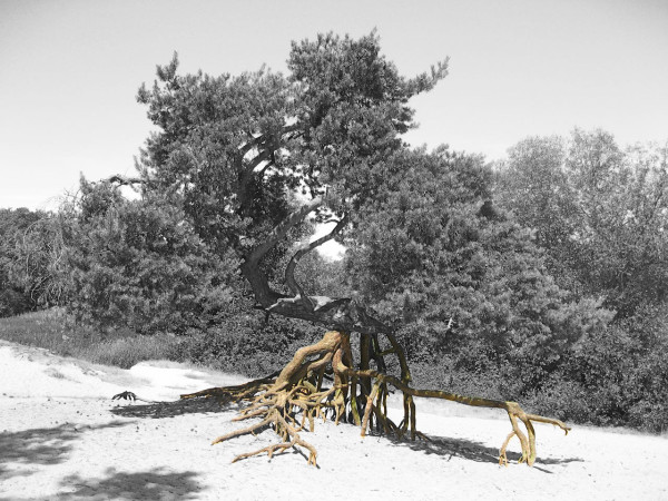 Gerard-de-Hoop-Odesi-Tables-1a-Roots-inspiration