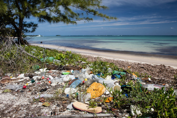 Shoreline-Plastic