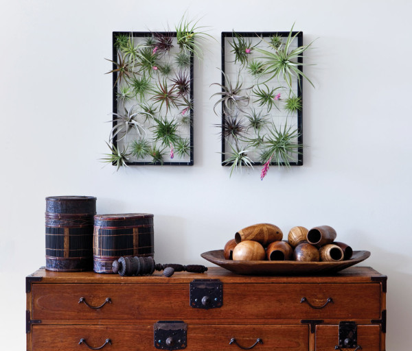 airplantman-wall-planter
