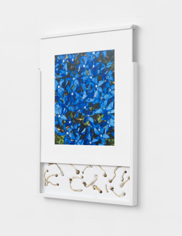 Security Sliding Frame and Silk Road Mushrooms (Gentiana), 2016