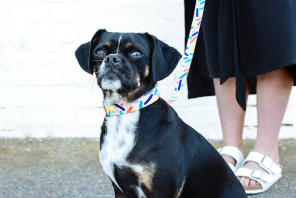 nice_digs_modern_leather_dog_collars_leashes