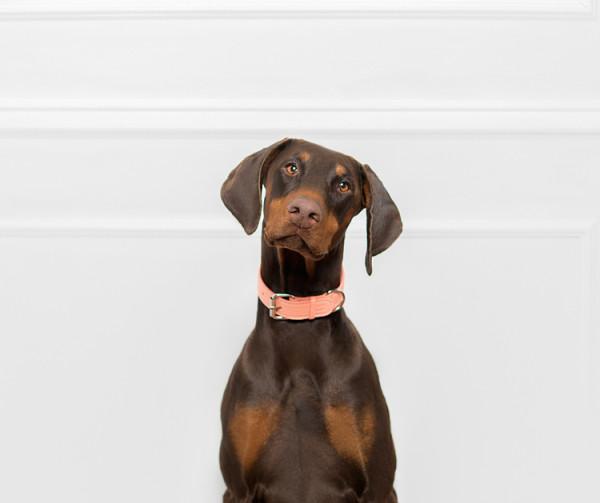 LAIKA_HUNT_luxury_leather_dog_collar_leash