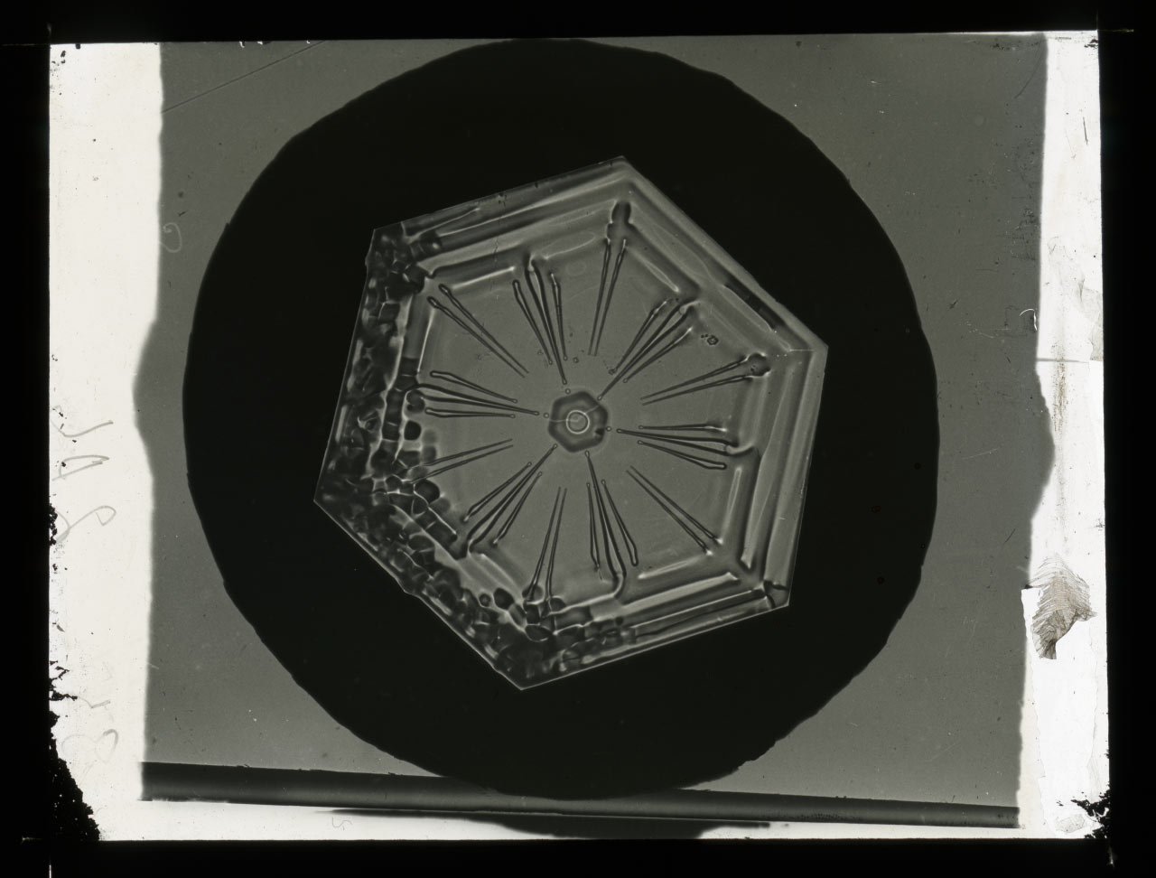 Untitled (Snow crystal photomicrographs), ca. 1883-1931. Courtesy Smithsonian Institution Archives