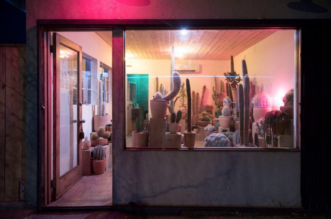 The Cactus Store