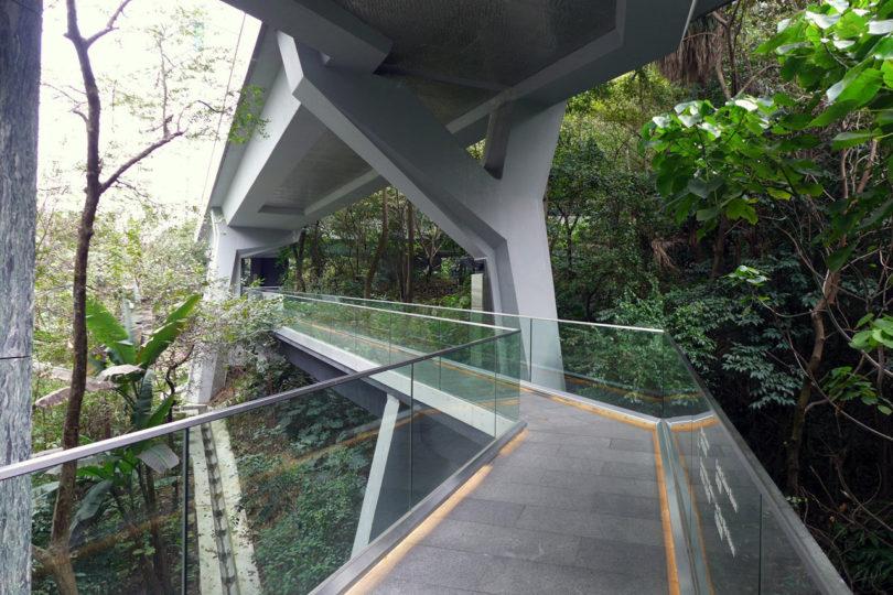 asia_society_fruit_bats_bridge