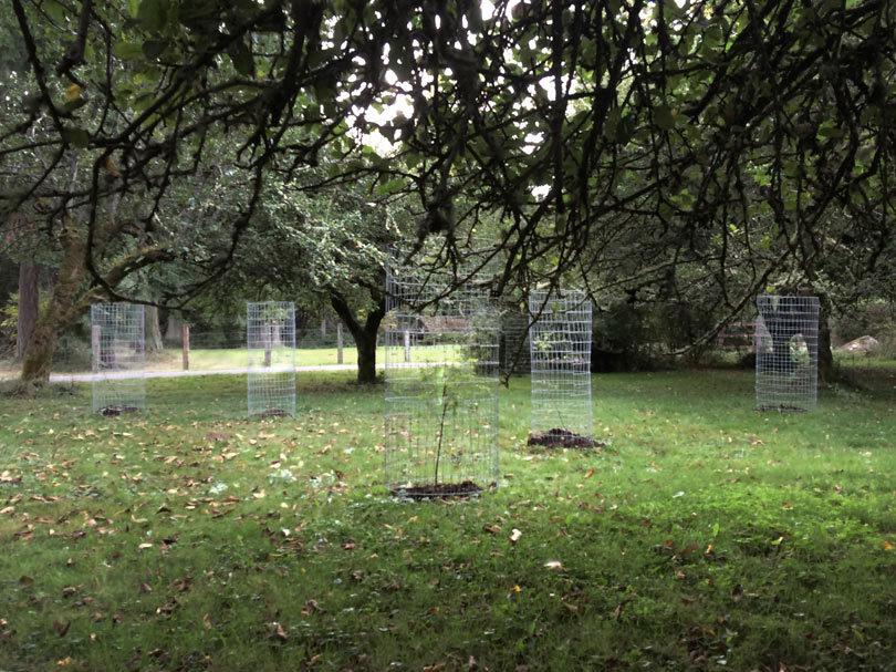 f5-scott-hudson-henrybuilt-1-black-locust-trees