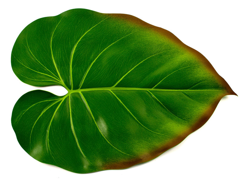 philodendron-placemat