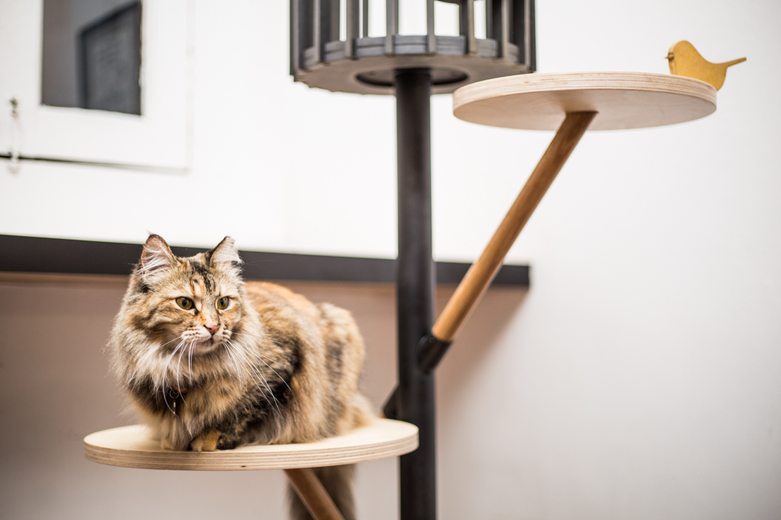 This Is Fur Real: Say Hello To Singapore's First-Ever Cat Furniture Design Show