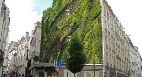 10 Vertical Gardens That Bring Greenery to Boring Walls