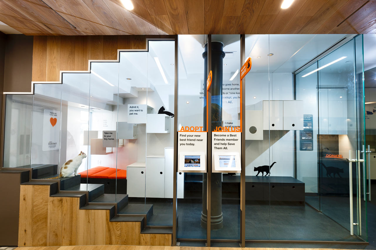 Architecture Interior Design Main Best Friends Animal Society Gets A State Of The Art Space In NYC