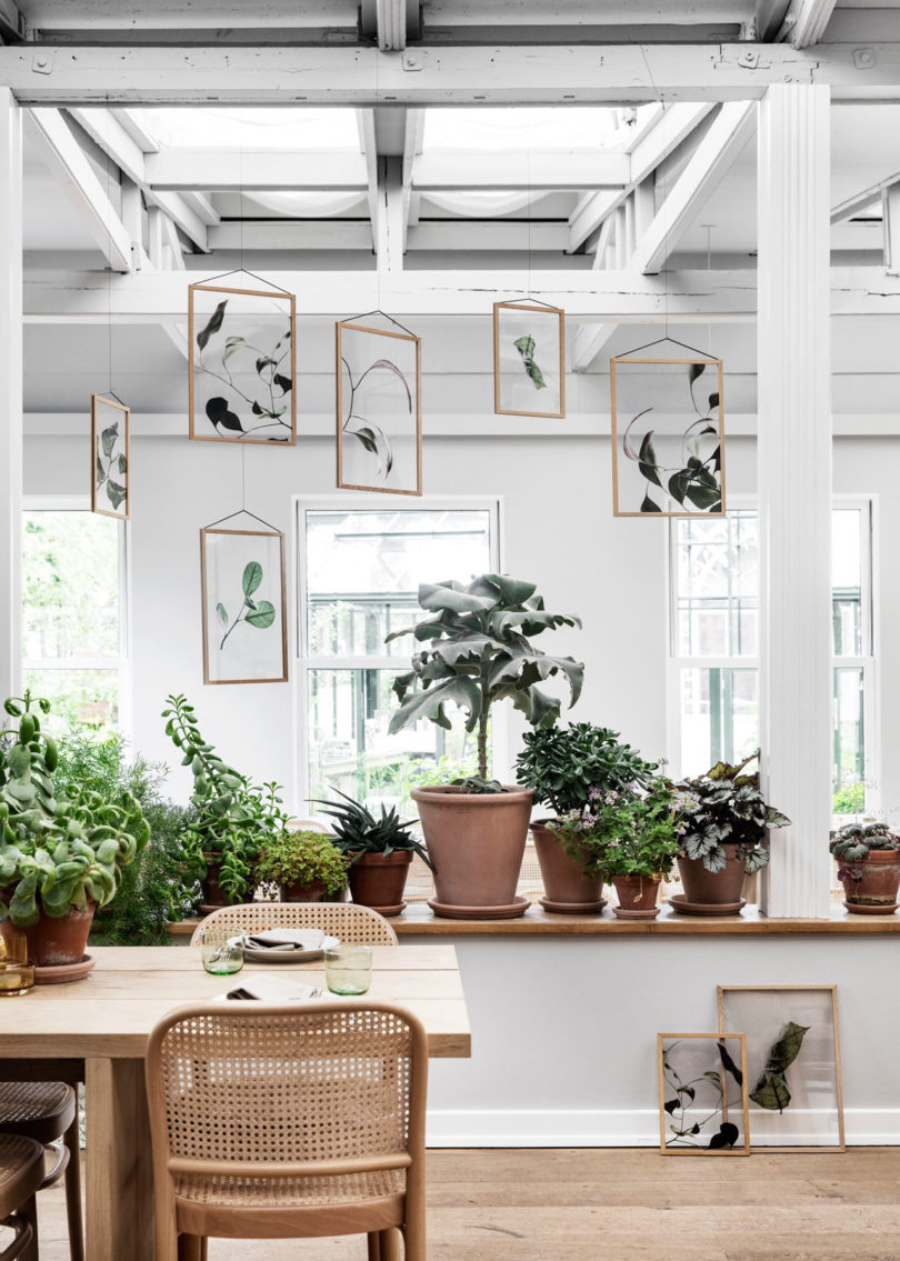 Three Danish Companies Release Transparent Botanical Prints