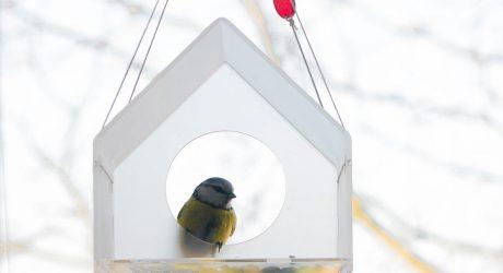 Modern Acrylic Bird Feeders by Jolanta Uczarczyk