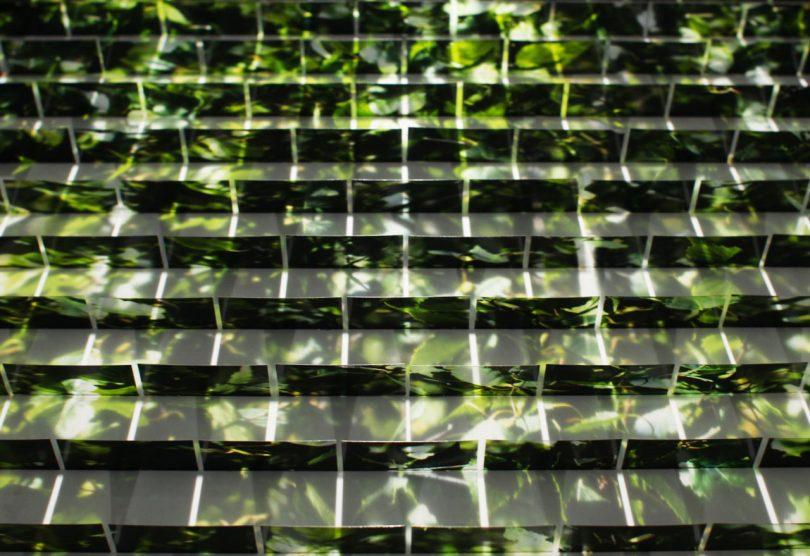 The Shadow Photographs of Wang Ningde