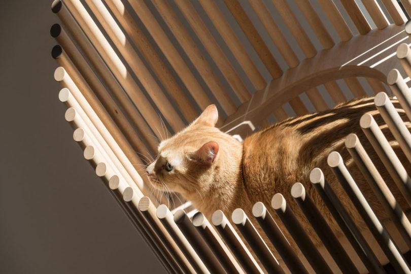 Neko A See Through Modern Cat Tree By Rinn Design Milk