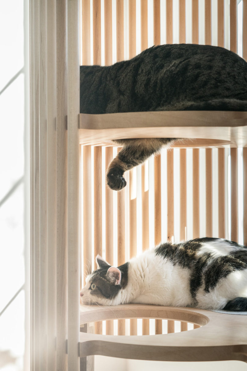 yoh contemporist komiyama offers tree natural modern furniture a designed sculptural wood this has pet cat is actually object neko that designer