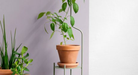 SUPERLIFE Wants Liana to Support Your Plants as They Grow