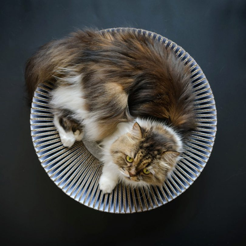 The KATRIS Nest Lets Your Cat Happily Lounge, Rub, and Scratch