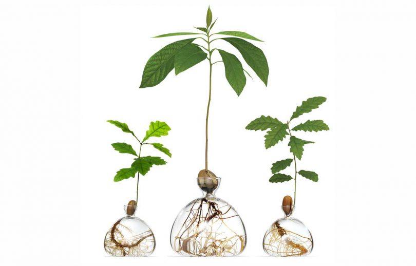 Ilex Studio's Glass Vases Let You Grown Your Own Trees