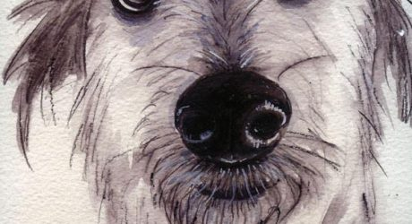 <i>1,000 Dog Portraits</i> by Robynne Raye