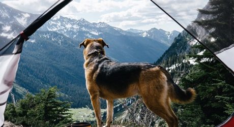 Summer Vibes: 'Camping With Dogs' on Instagram