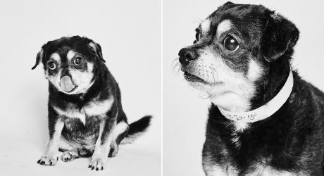 Social Tees Rescue Dog Portraits by Shayan Asgharnia