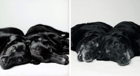 <i>Dog Years: Faithful Friends Then & Now</i> Photography Book by Amanda Jones