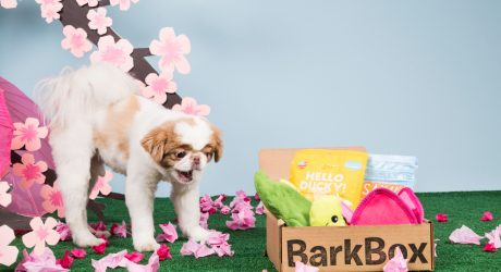BarkBox: A Monthly Offering to Your Canine Overlords