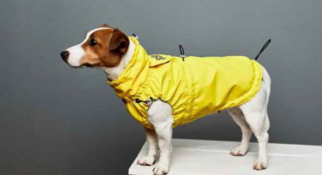 Dog Raincoats from Bark and Go