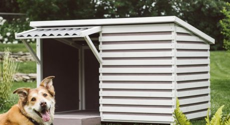 Archie Modern Dog House from Boomer & George