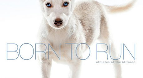 <i>Born to Run: Athletes of the Iditarod</i> by Albert Lewis