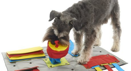 Buster Interactive Dog Activity Mat