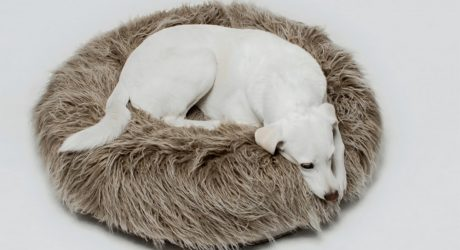 New Yeti Dog Pouf from Cloud7