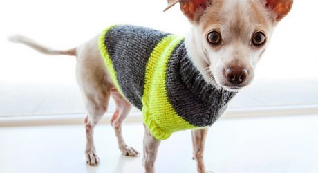 Dog-I-Y: DIY Puppy Pullover Sweater