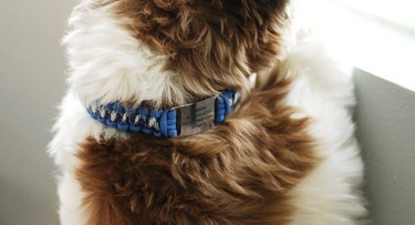 Review: ScruffTag Paracord Dog Collar by DogIDs