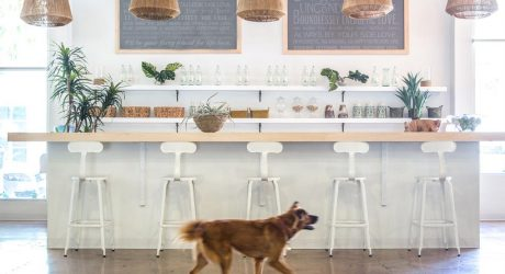 Spotted: The Incredible Dog-Friendly Office of DogVacay