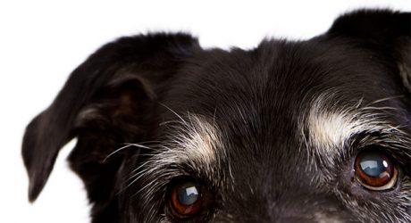 Dog Photography by Pauline Zonneveld