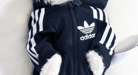 DOG-I-Y: A Custom Dog Tracksuit
