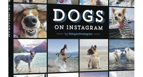 Dogs on Instagram Photo Book